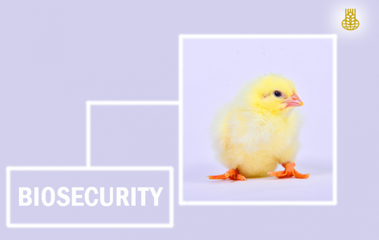 VACCINATION OR BIOSECURITY, WHICH IS MORE IMPORTANT?